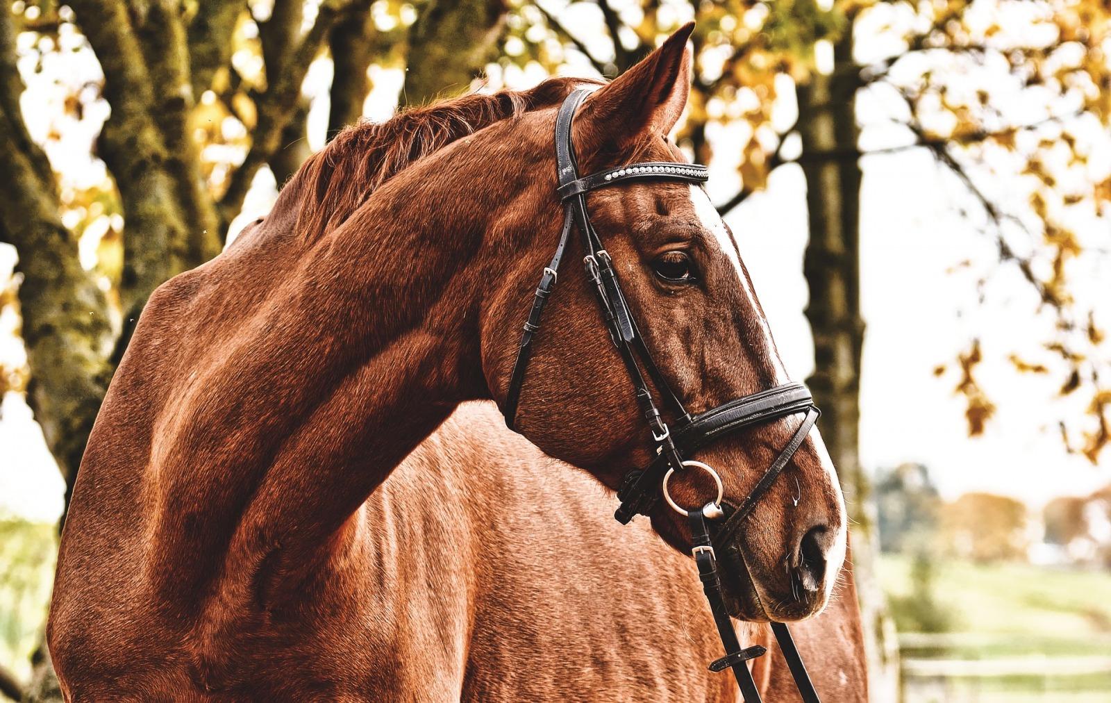 fodervärd häst avtal, Fodervärd åt häst och upprätta skriftligt avtal, Rättsakuten